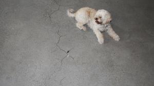 Poleret betongulv i lys beton samt betonvæg - reparation